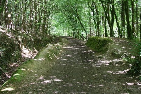 Woodland_Path_-_geograph.org.uk_-_207382